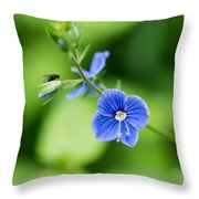 Small Fly On A Small Wildflower - Featured 3 Throw Pillow