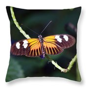 Small Postman Butterfly Throw Pillow