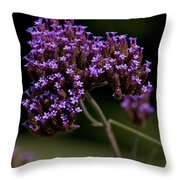 Small Purple Flowers On A Verbena Plant Throw Pillow