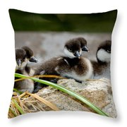 Smew Ducklings On Shore Throw Pillow