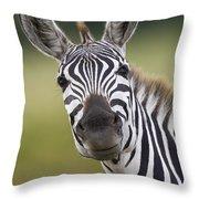 Smiling Burchells Zebra Throw Pillow