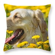 Smiling Dog Throw Pillow