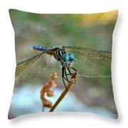 Smiling Dragon Fly Throw Pillow