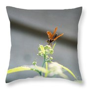 Smiling Dragonfly 1 Throw Pillow