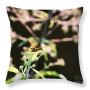 Smiling Dragonfly 3 Throw Pillow