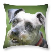 Smiling Schnauzer Throw Pillow