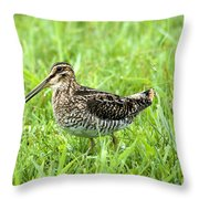 Smiling Snipe Throw Pillow