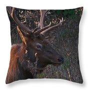 Smoky Bull Throw Pillow