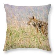 Smoky Mountains Coyote Throw Pillow
