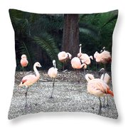 Smudgestick Flamingos Throw Pillow