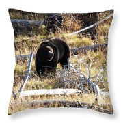 Snacking Bruin Throw Pillow