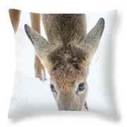Snacking Deer Throw Pillow