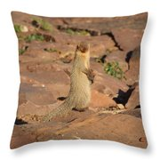 Mongoose Or Snake Eater Throw Pillow