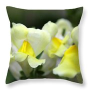 Snapdragons Group Of Yellow Cream Throw Pillow