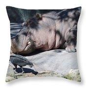 Sneaky Bird Throw Pillow