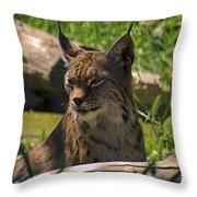 Sniaarrff Throw Pillow