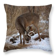 Sniffing Stag Throw Pillow