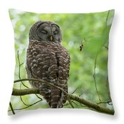 Snooze Time - Owl Throw Pillow