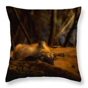 Snoozing Kit Fox Throw Pillow by Thomas Young