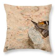 Snout Butterfly  Throw Pillow