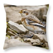 Snow Bunting Pictures 43 Throw Pillow