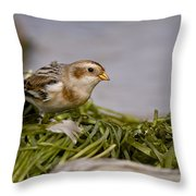 Snow Bunting Pictures 87 Throw Pillow