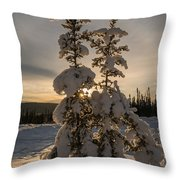 Snow Capped Sitka Spruce Throw Pillow