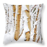 Snow Covered Birch Trees Throw Pillow by John Kelly