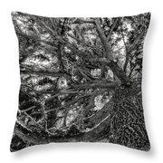 Snow Covered Pine Tree Seen From Below Throw Pillow