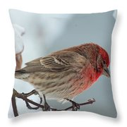 Snow Day Housefinch  Throw Pillow