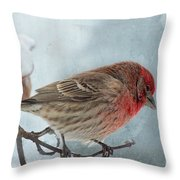 Snow Day Housefinch With Texture Throw Pillow