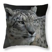 Snow Leopard 15 Throw Pillow