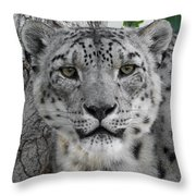 Snow Leopard 5 Throw Pillow