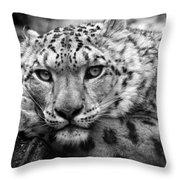 Snow Leopard In Black And White Throw Pillow