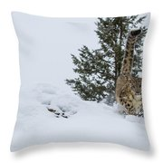 Snow Leopard Periscope Throw Pillow