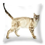 Snow Marble Bengal Cat Throw Pillow