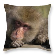 Snow Monkeys-just Hanging Out Throw Pillow
