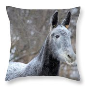 Snow Mule Throw Pillow