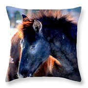 Snow Nose  Throw Pillow by Jeanne  Bencich-Nations