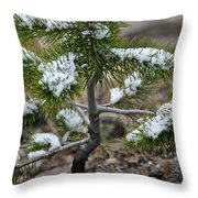 Snow On Baby Pine Tree In Yellowstone Throw Pillow