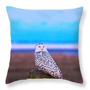 Snow Owl At Sunset Throw Pillow