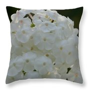 Snow Phlox Throw Pillow