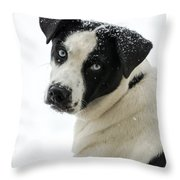 Snow Puppy Throw Pillow