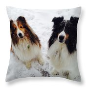 Snow Shelties Throw Pillow