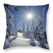 1m4882-snow Laden Tree Sunburst Throw Pillow