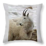 Snow White Mountain Goat Throw Pillow