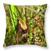 Snowberry Clearwing Throw Pillow