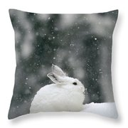 Snowshoe Hare In Snowfall Yellowstone Throw Pillow