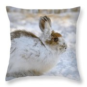 Snowshoe Hare In Winter Throw Pillow