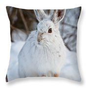Snowshoe Hare Pictures 130 Throw Pillow